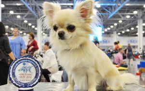 СУПЕР Результат: WORLD DOG SHOW 2016 Judge- Barbosov K.(Russia) GENTLE KISS YOU MY PRINCE (Юша) -  BOS JUNIOR , JUNIOR WORLD WINNER‑2016